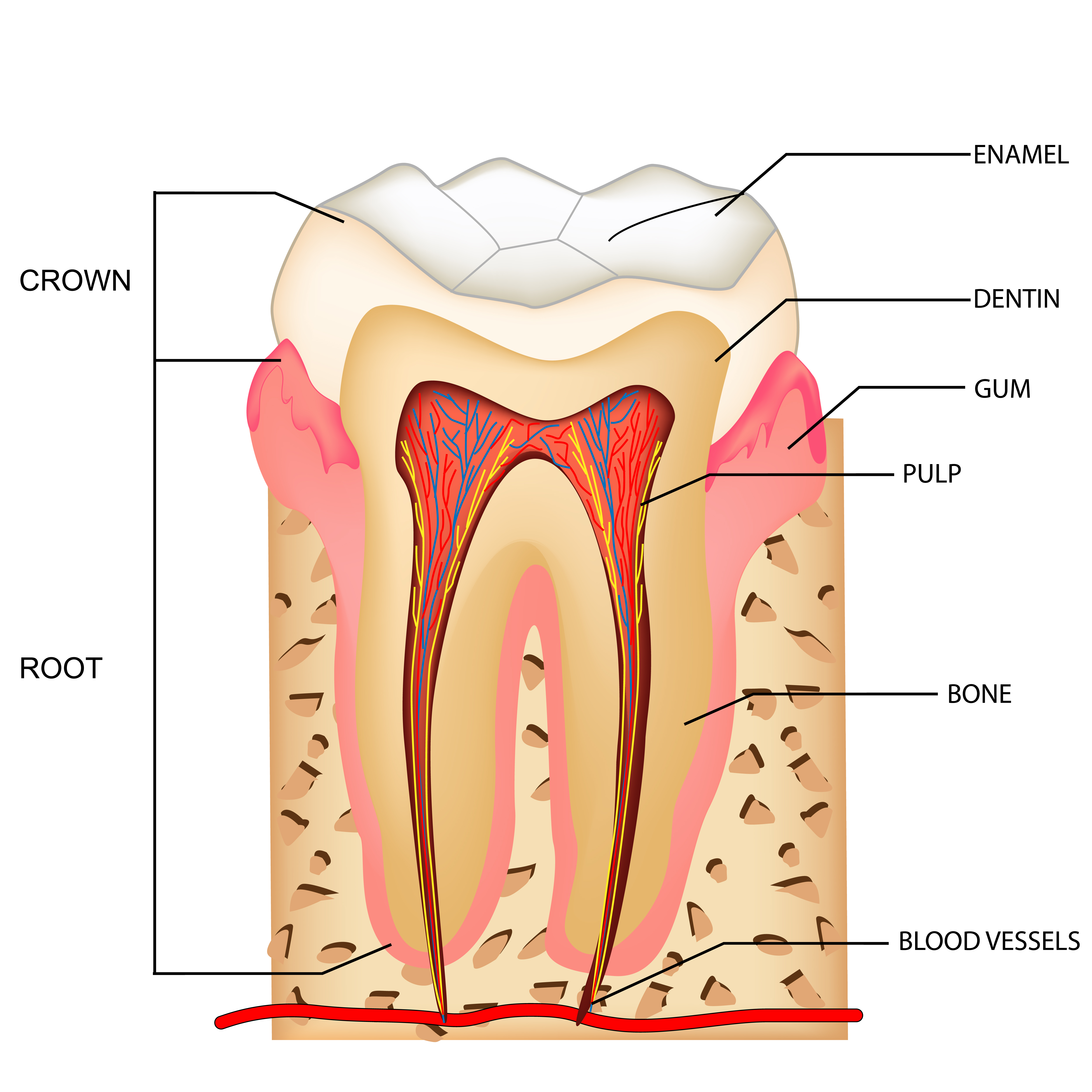 What Is Root Canal Therapy